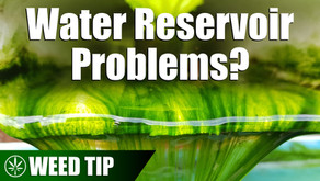 Fixing Hydroponic Issues with the Water Reservoir