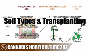 Soil Types To Use & How To Transplant A Seedling