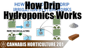 How A Drip Hydroponic System Works