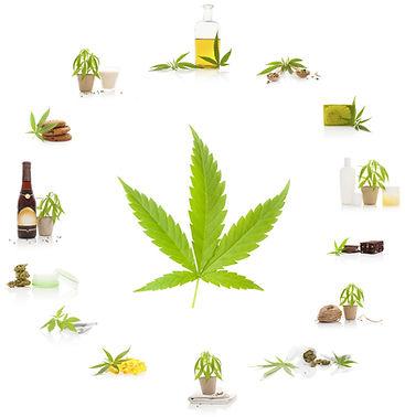 Cannabis Benifits.jpg