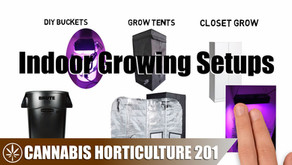 What Indoor Grow Setup Is Right For You?