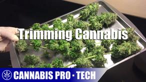 Cannabis Pro・Tech: Trimming Cannabis