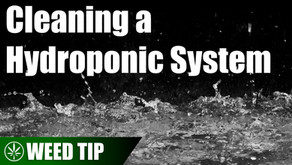 Sanitizing and Sterilizing a Hydroponic Grow Space