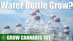 Water Bottle Timelapse Grow From Seed to Harvest