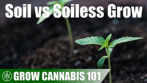Comparing Soil with a Soilless Timelapse Grow