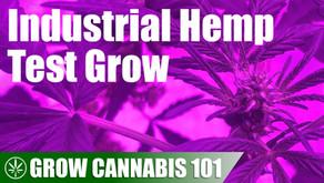 Testing an Industrial Hemp Seed to Harvest Timelapse Grow