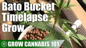 Bato Bucket (Dutch Bucket) Seed to Harvest Timelapse Grow
