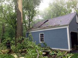 tree by garage