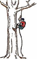 My Tree Climber