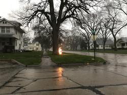 Lightning fire intown tree