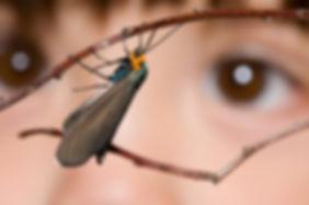 eyes-looking-at-moth-300x199.jpg