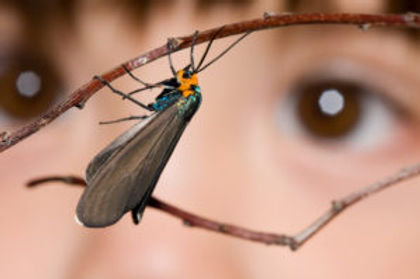 eyes-looking-at-moth-300x199.jpg
