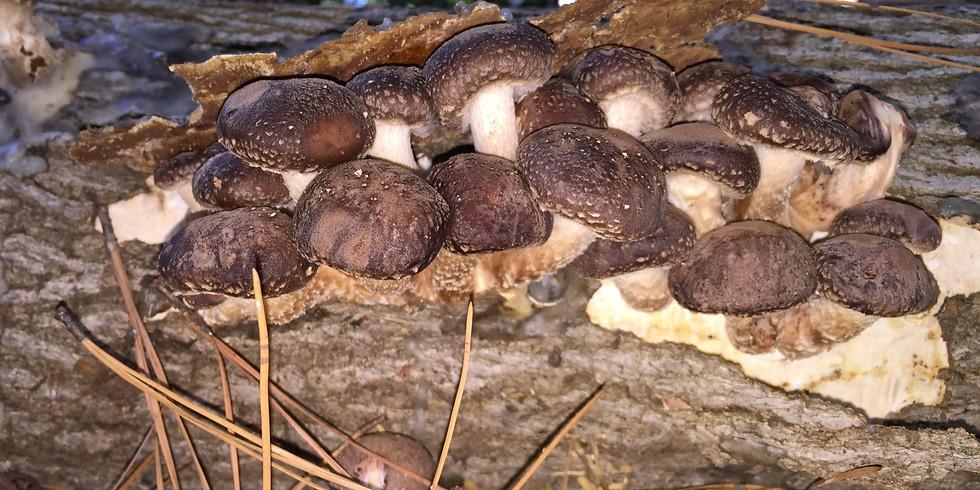 Make Your Own Mushroom Logs!