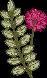 Botany           _edited.png
