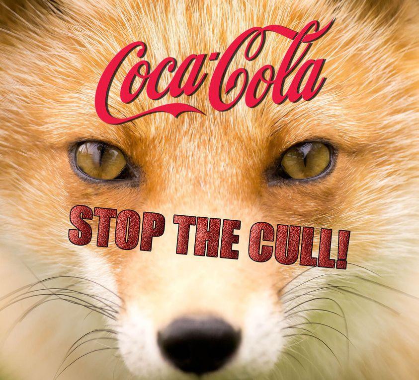 coca cola fox culling