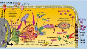 """Veröffentlichung von Walter G. Land in """"Genes & Immunity"""""""