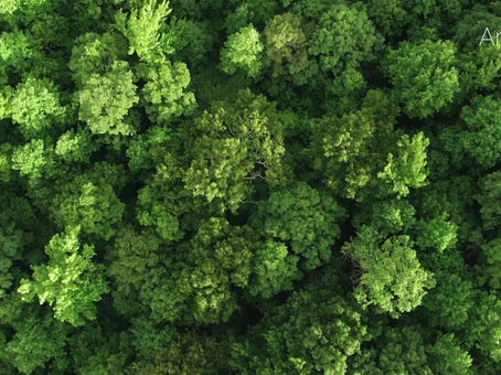 Artyish to plant 5,000 trees with Tree Plan