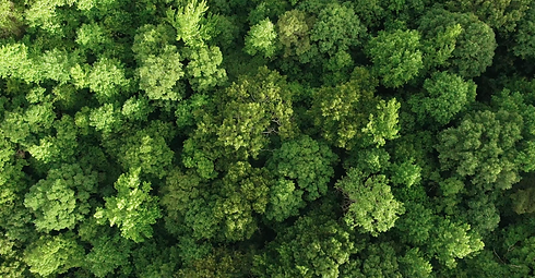 Trees Background Image.png