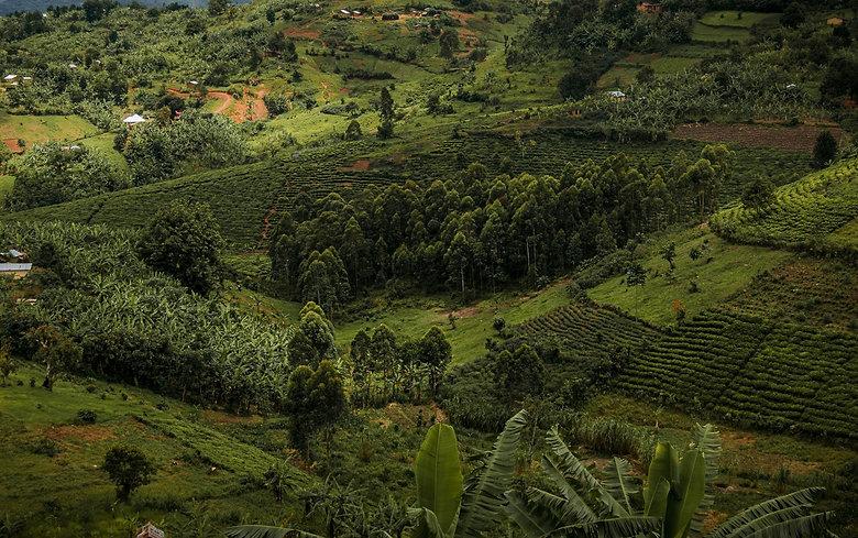 tree-plan-environmental-governance-tree-planting-ecology-marketing-pexels-harvey-sapir-5416967.jpg