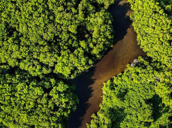 tree-plan-environmental-governance-tree-planting-ecology-marketing-pexels-thiago-japyassu-1650669.jpg