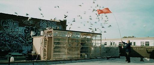 Pigeon-(United-States)-by-Raphael-Hallor