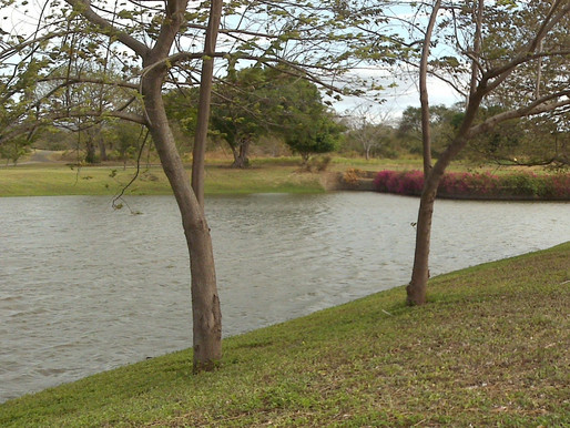 Now is the Perfect Time to Add a Pond or Lake to your Property