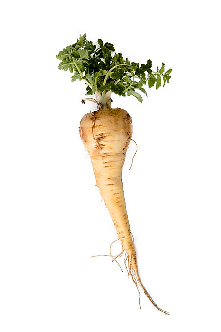 Parsnip. Fresh parsnip. Pasher with pars