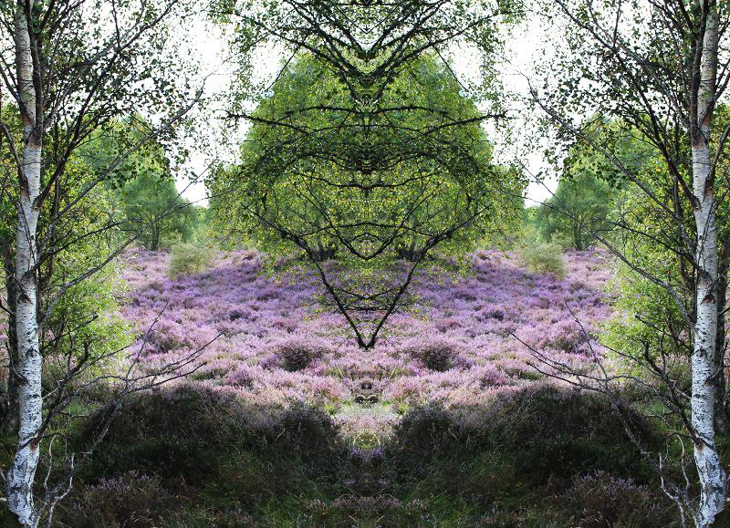 Purple lightness