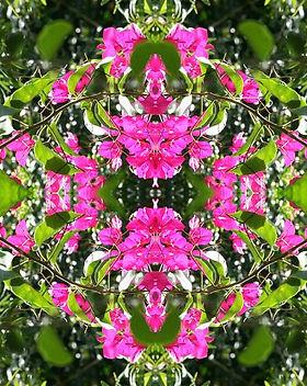 Pink Gate.jpg