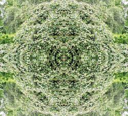 Mandala der Fülle