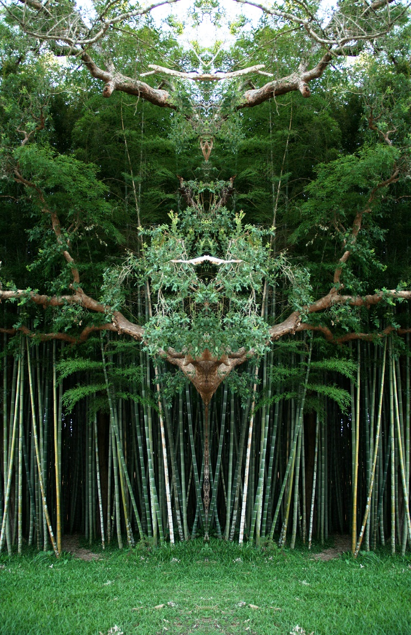 Hüter des Bambuswaldes