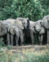 Uganda Elephants.jpg
