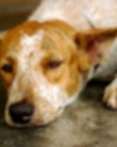 Dog Bestiality.jpg