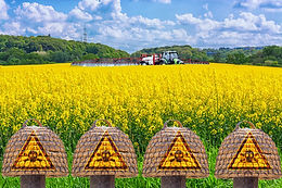 UK Government Authorises Use of Bee-Killing Pesticide by Sugar Beet Farmers