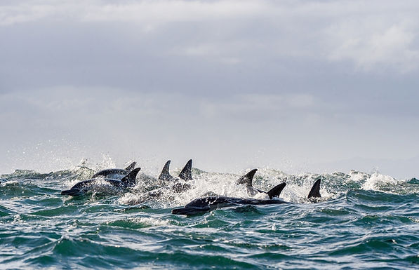 The Truth Behind The Annual Taiji Dolphin Hunts