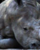 Rhino1.jpg
