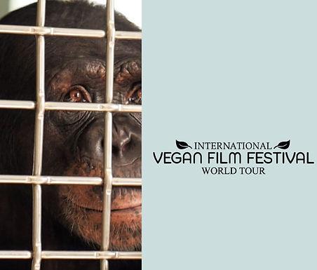 Vegan Film Festival Announces Free Online Film Streaming
