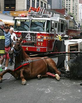 horsecarriage.jpg
