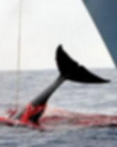 whaling_edited.jpg