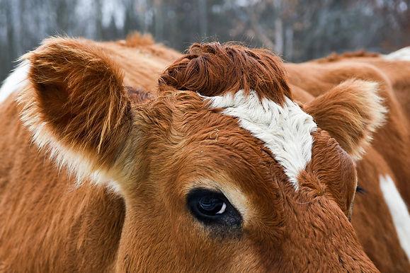 Our Cruel Treatment of Animals Led to the Coronavirus
