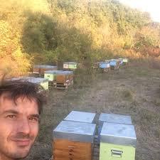 L'abeille dans tous ses états !