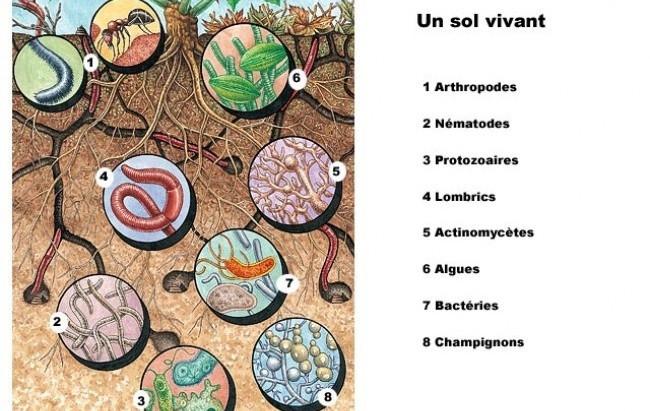 Homo, Humus, Terre ... la vie des sols.