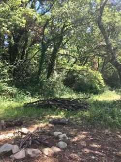 2 hectares de chênaie aménagée