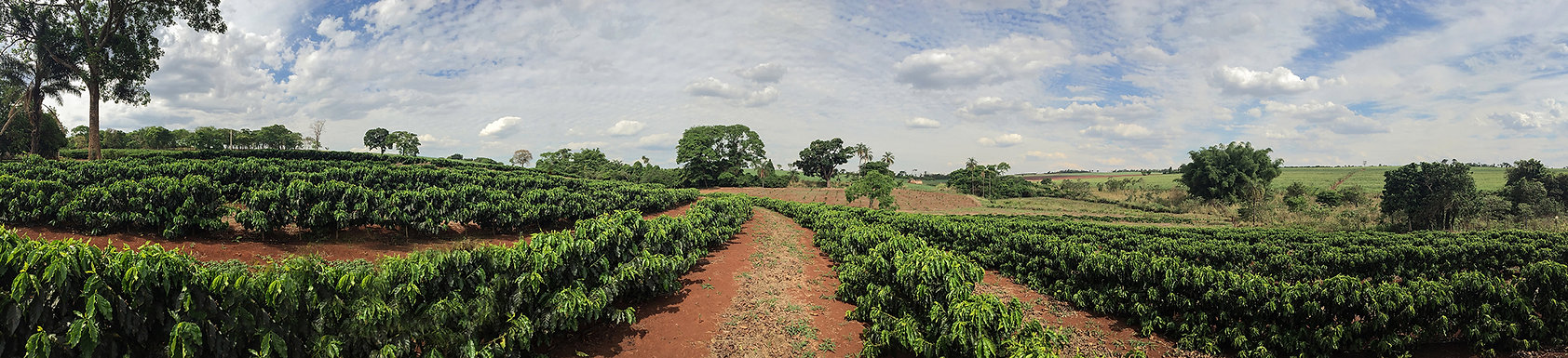 coffee-plantation.jpg