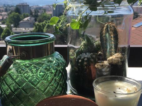 Recyclage des pots en verre en terrariums