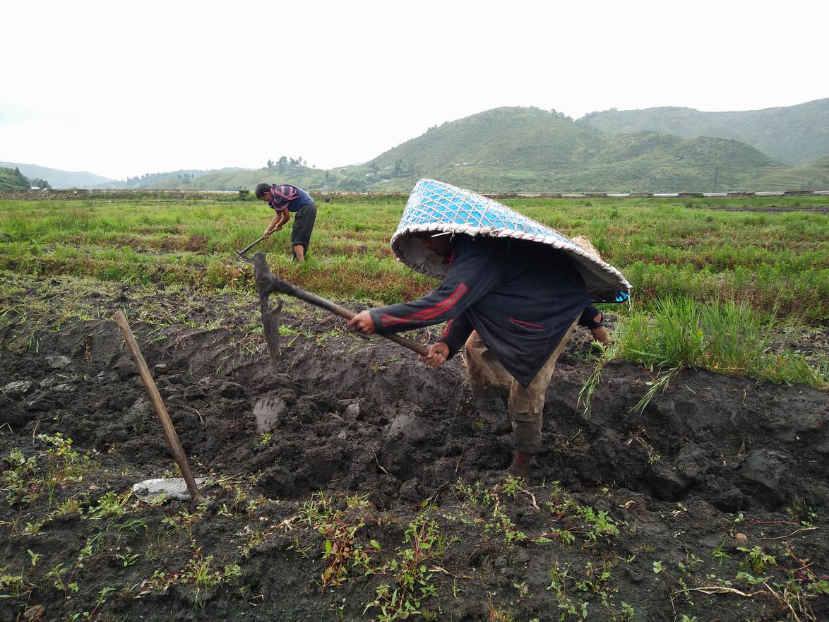 Rice & Potato Farmers