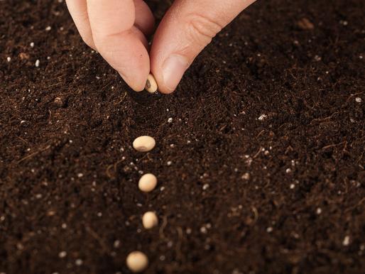 Il seme