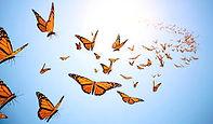 téléchargement_papillons.jpeg