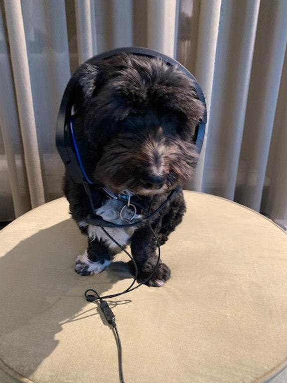 VB kantoor hond.jpg