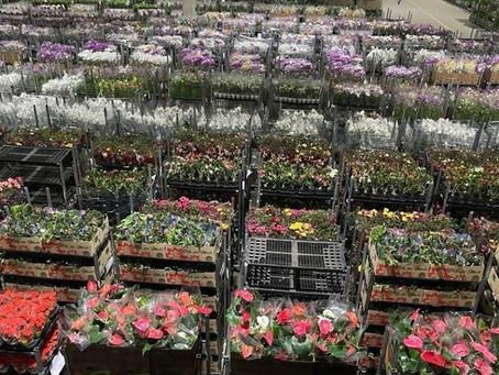 Após baque em 2020, setor de flores projeta aumento nas vendas com o Dia das Mães.